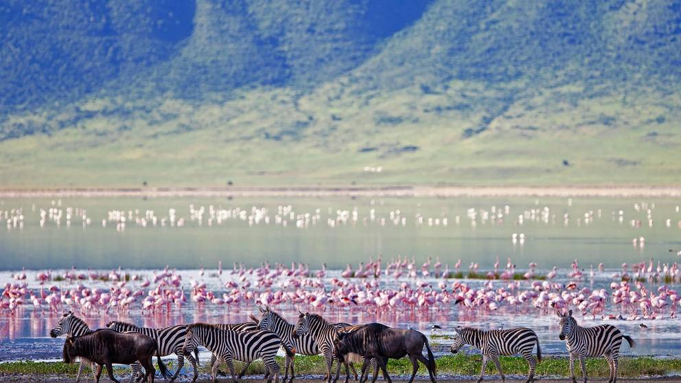 Zebras, wildebeest and flamingos in Ngorongoro Crater