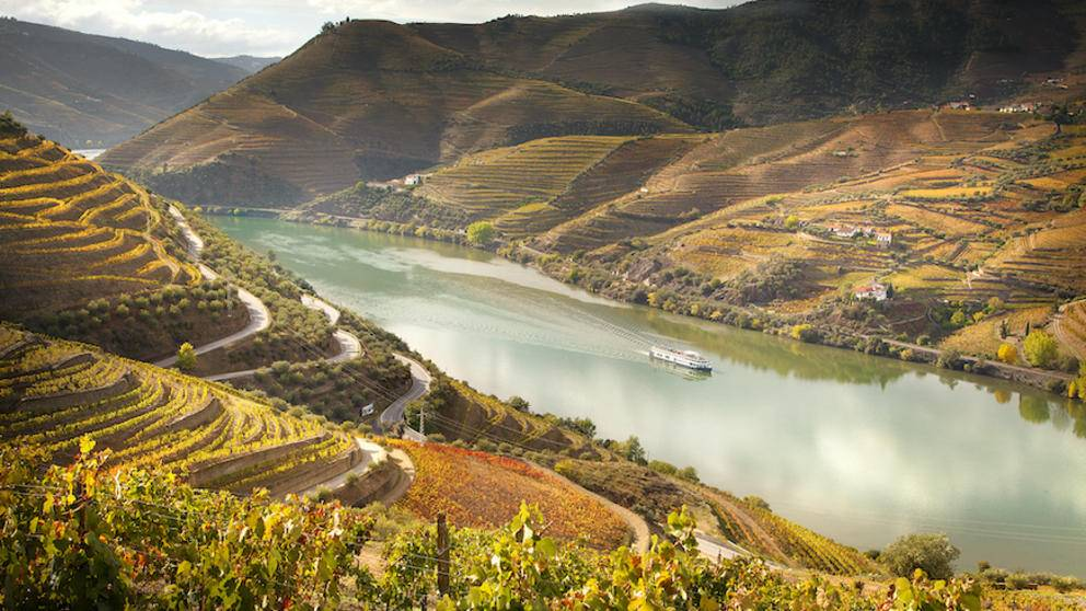 Vineyards of Douro Valley, Portugal.