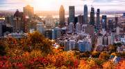 autumn colors, tree, city skyline