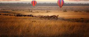 Hot air balloons over wildebeest on the Masai Mara.